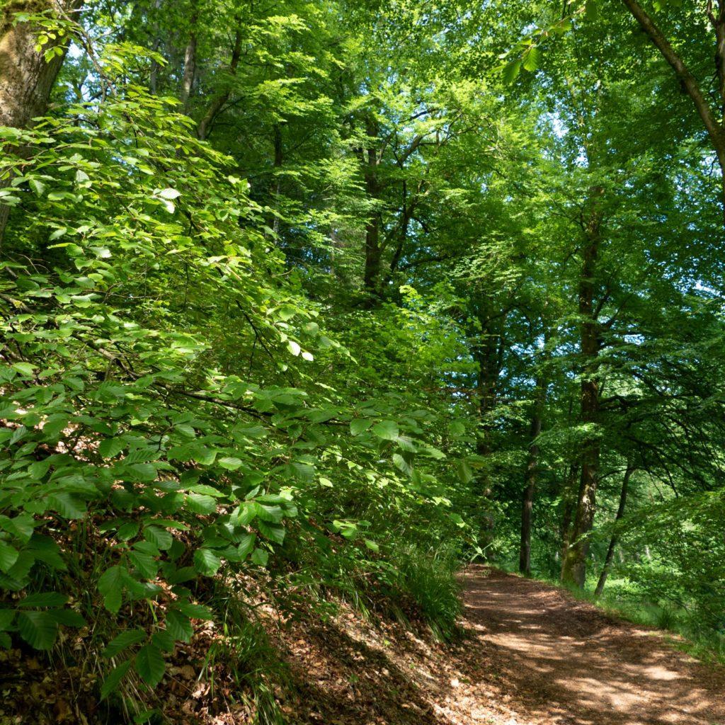 Tochten in de Ardennen